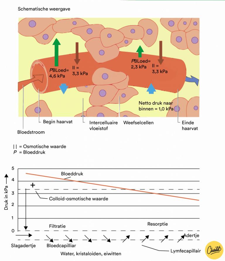 Het lymfesysteem